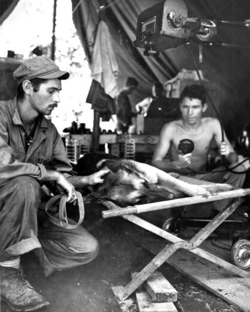 A Marine Corps dog handler comforts his German shepherd while the dog is X-rayed after being shot by a Japanese sniper on Bougainville, The dog died of its injuries. National Archives via the National World War II Museum