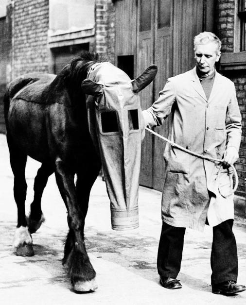 """A docile horse wears a gas mask, as a precaution against gas attacks, that was developed by """"Our Dumb Friends League,"""" a humane society in London, England, March 27, 1940. The mask might almost be a feed bag, except for the window panes and the enclosed ear muffs. (AP Photo)"""