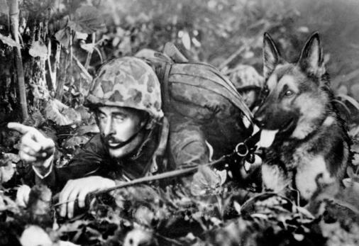 A well camouflaged Marine is giving silent instructions to a Marine Corps jungle-trained dog on the front lines of the beachhead in Bougainville, Soloman Islands, on Jan. 13, 1944 during World War II. Dogs donated by citizens proved invaluable in locating Japanese snipers. (AP Photo)