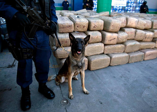 A police officer and his dog stand guard by seized marijuana at the Baja California state police headquarters in Tijuana, Mexico, Monday Nov. 1, 2010. According to state police, 12,976 kilograms (28,606 pounds) of marijuana were seized and one person arrested in an operation early Monday. (AP Photo/Guillermo Arias)