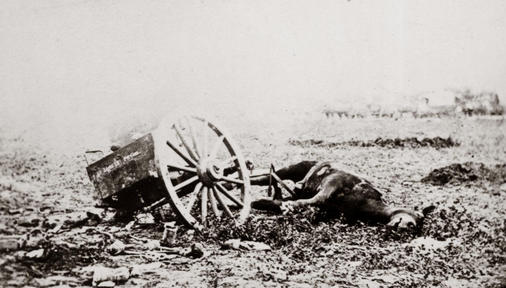 Dead horse on battlefield, Gettysburg, Pennsylvania photographed 1863. Civil War Photograph Collection Library of Congress Prints and Photographs Division.